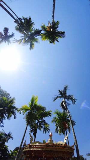 Palm Tree Tree Low Angle View Growth Nature No People Sky Outdoors Sun Beauty In Nature Scenics Day Palm Frond Thailand Clear Sky
