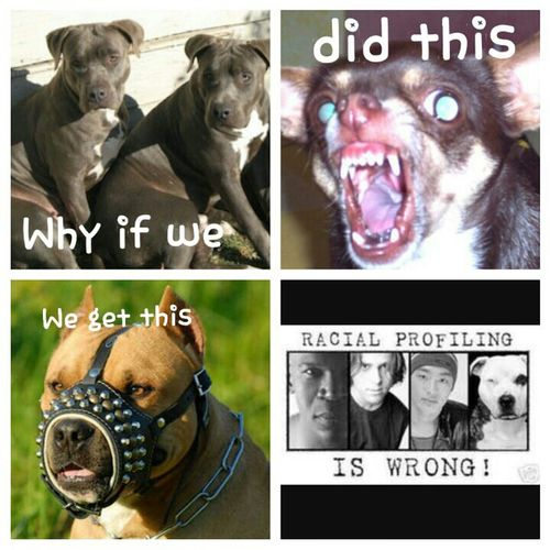 Dog Check This Out Hello World Every Picture Tells A Story Make Magic Happen Pitbull♥ I Love My Dog Stop Abuse  No Racial Love All Animals