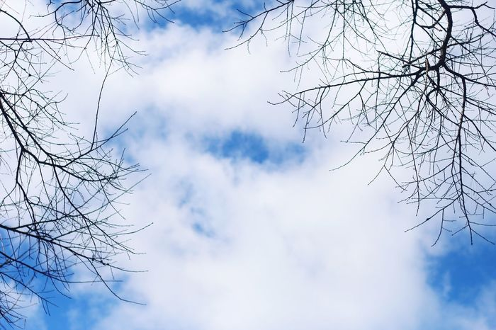 Sky Low Angle View Sky Cloud - Sky Branch Plant Beauty In Nature Nature Day No People Tree Outdoors