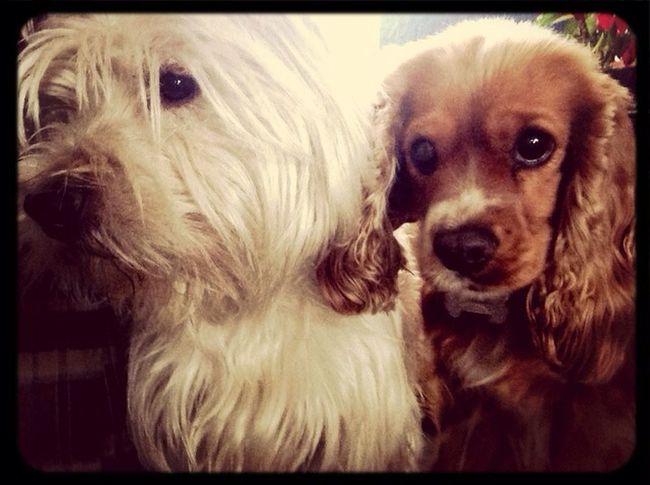 Reinita Dogs A Dogs Life
