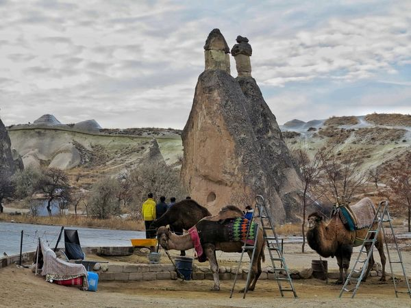 Camels Turkey Nature Outdoors Landscape Lunar Landscape Capadocia Mushroom Shape Rock Unessco World Heritage Site Beauty In Nature Cappadocia/Turkey Rock - Object Göreme Rock Hoodoo Volcanic Landscape Volcanic Rocks Travel Destinations Senic View Open Air Museum Travel Destination Landmark Abstract Destination Turkey💕 Scenics