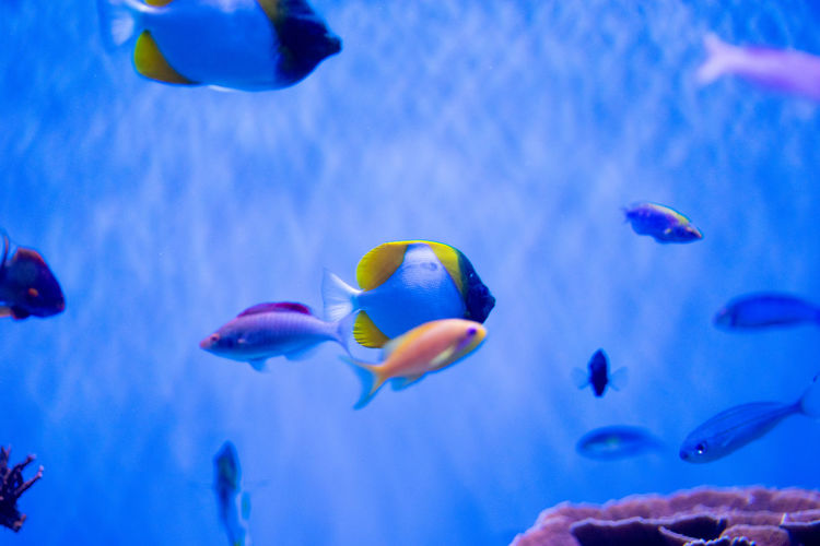 Underwater Animal Themes Animals In The Wild Animal Wildlife Fish Water Sea Animal Swimming Group Of Animals Vertebrate Sea Life Marine Large Group Of Animals Tank Animals In Captivity Beauty In Nature No People Nature UnderSea School Of Fish Ecosystem
