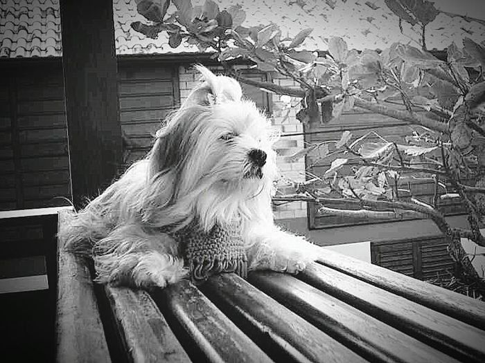 Bella...Bellinha Enjoying Life First Eyeem Photo
