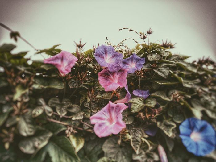Flores Colores Plantas HAZLOQUEQUIERAS Yo No Necesito Mas Myfoto Flower Art Enjoy Beautiful Day Myphoto Best  EyeEm EyeEm Best Shots EyeEm Best Edits Eye4photography  EyeEm Best Shots - Nature My Photo