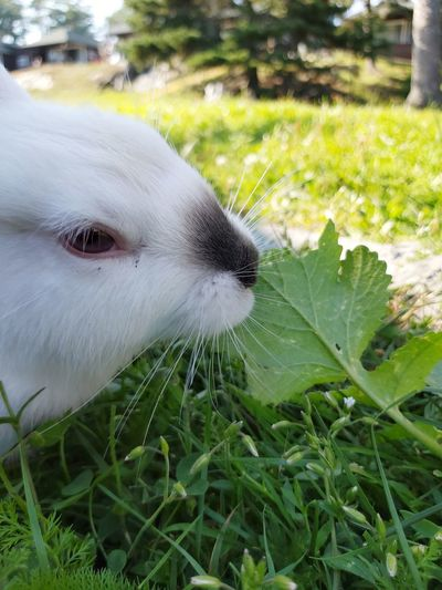 Close-up of a rabbit on field