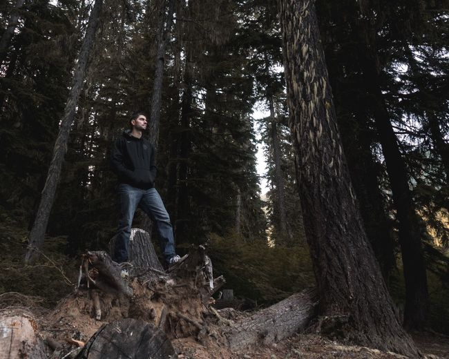 Low angle view of man standing on tree stump in forest