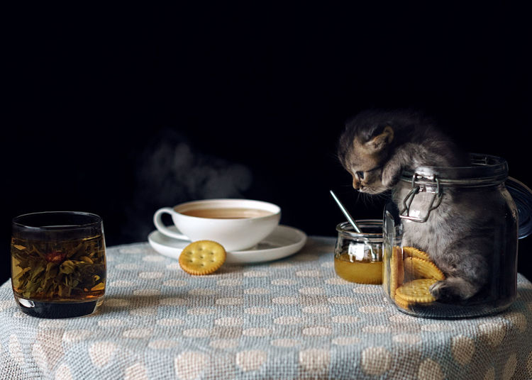 kitten Black Background Cat Drink Drinking Glass Food Food And Drink Freshness Herbal Tea Indoors  Kitten No People Refreshment Studio Shot Table Tea Tea - Hot Drink Teapot Pet Portraits