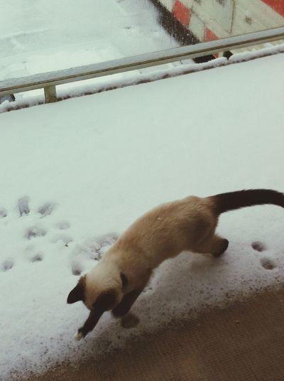 Zelda's first time in the snow! ? Zelda Canada