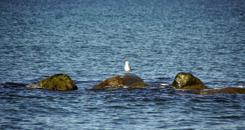 View of seagull in sea