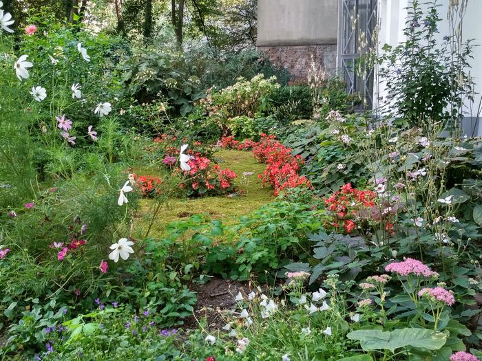 Berliner Hinterhöfe Hinterhofromantik Hinterhoffotografie Backyardphotography Hinterhöfe Hinterhof Flower Grass Architecture Plant Growing Backyard Blooming