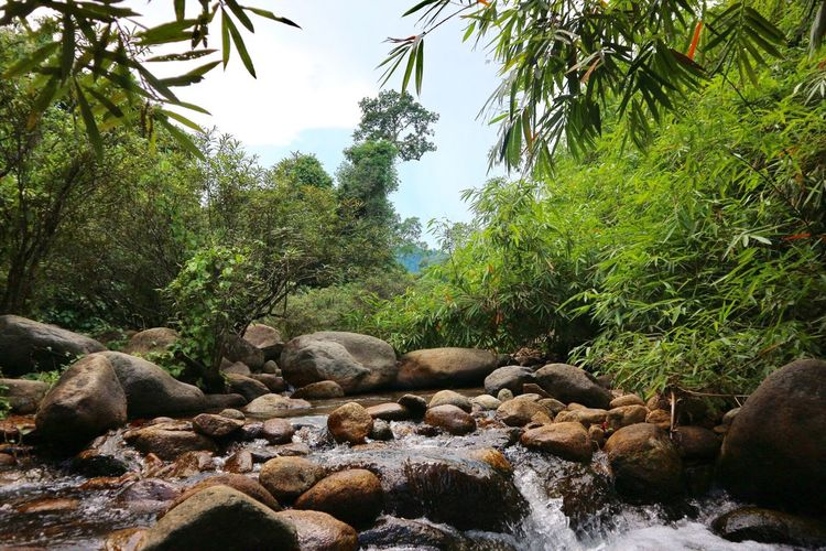Rock - Object Tree Nature Outdoors Beauty In Nature Water Day No People Green Color Forest Landscape Scenics Plant Waterfall Sky