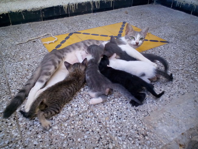 Poor mother, they finished her, these are her lasts. Paint The Town Yellow Animal Themes Domestic Animals Domestic Cat Feline Lying Down Mammal No People Outdoors