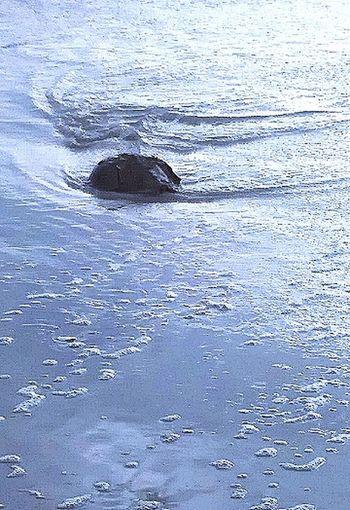 Sea Creature Sea Life Sea