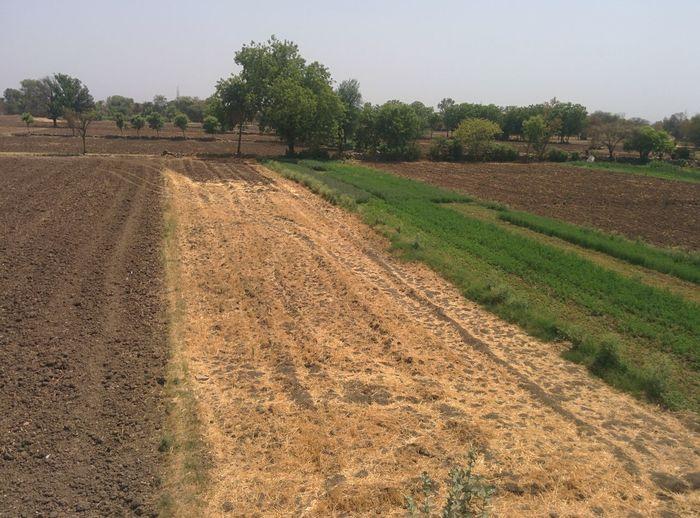 Landscape Rural Scene Plant