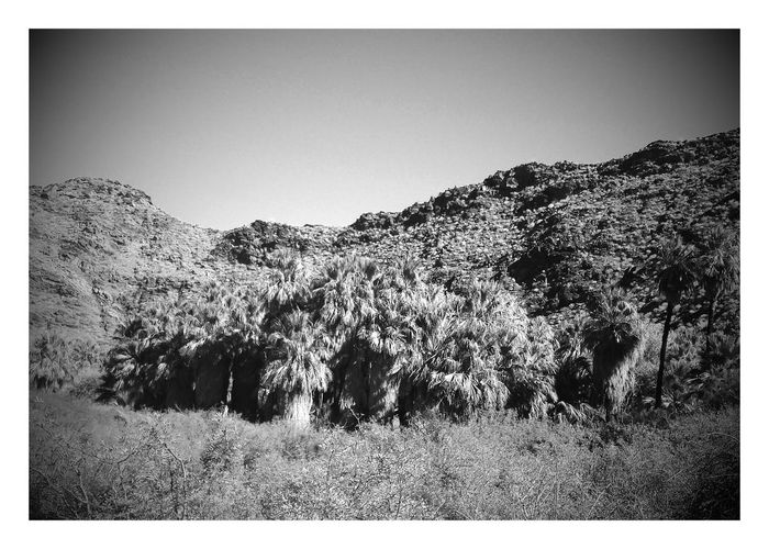 Palm Springs California desert