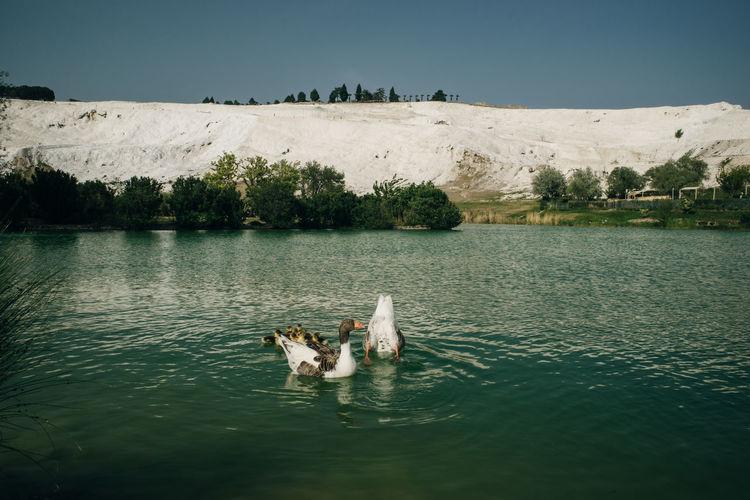 View of dog swimming in lake
