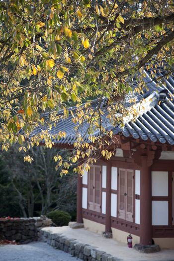 autumn at Naesosa, a Buddhism temple in Byeonsan, Buan, Jeonbuk, South Korea Architecture Autumn Buddhism Building Exterior Built Structure Day Fall Beauty Naesosa Nature No People Outdoors Sky Temple Tree