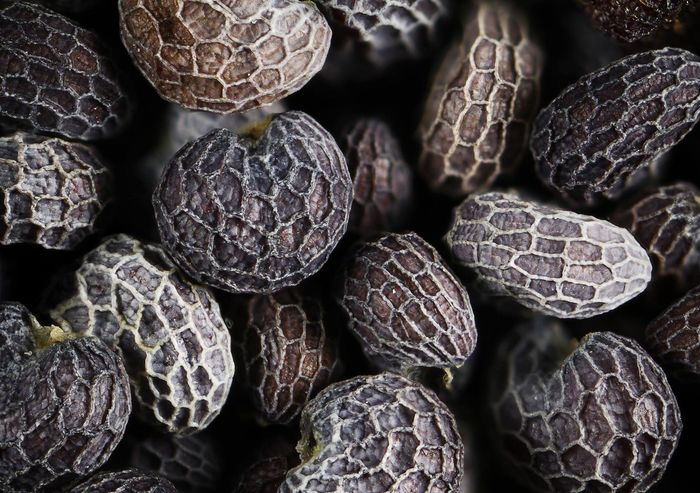 Poppy seeds Backgrounds Close-up Day Food Food And Drink Freshness Full Frame Healthy Eating Indoors  Macro Macro Beauty Macro Photography Macro_captures Macro_collection Macro_perfection Macrophotography No People Poppy Poppy Seed Poppys PoppySeed Poppyseeds