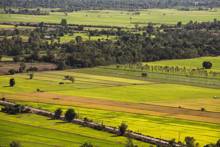 Top view on green landscape Landscape Top View Landscape Environment Agriculture Field Land Plant Green Color Beauty In Nature Nature Tree High Angle View Farm Scenics - Nature Growth Tranquil Scene Crop