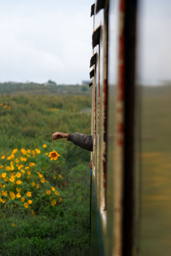 Person hand holding flower over field seen through train