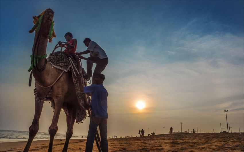 """""""A camel makes an elephant feel like a jet plane"""". Sony ILCA 68. Day Nature One Animal People Real People Riding Sky Sunset"""