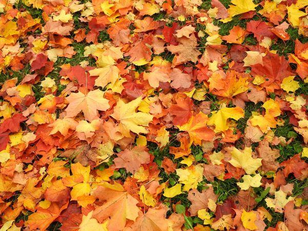 Leaf🍂 Walking Tree Area Colors Of Autumn Autumn🍁🍁🍁 Autumn Day Beauty In Nature Nature Park Colors Of Sankt-Peterburg Sankt-Petersburg Russia