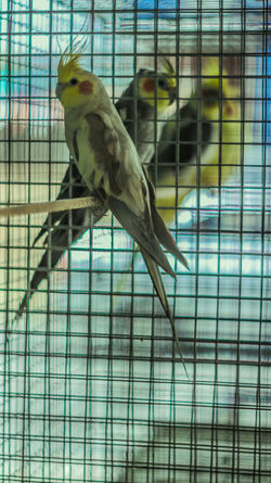 Animal Themes Animal Wildlife Animals In Captivity Animals In The Wild Beauty In Nature Bird Birdcage Budgerigar Cage Close-up Day Focus On Foreground Full Length Indoors  Mammal Nature No People One Animal Parrot Perching Pets Sky