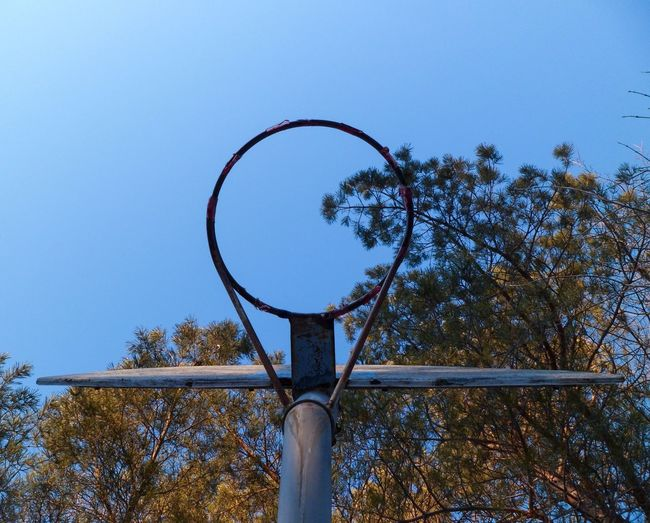 Learn & Shoot: Balancing Elements Looking Up Nothing But Blue Sky Nothing But Net No Net Basketball Hoop Symmetry Symmetrical Bright Trees Colourful Trees Tree Tops