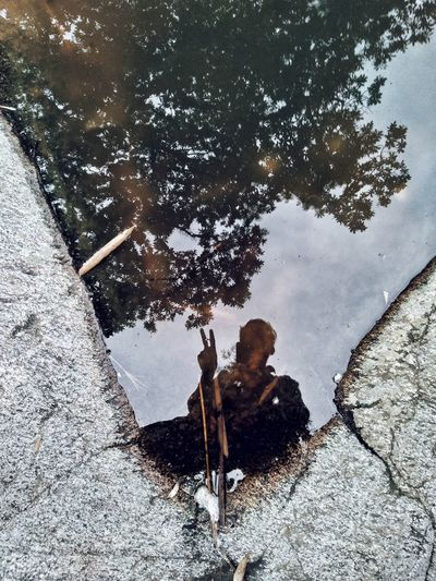 Reflection of trees in puddle on rock