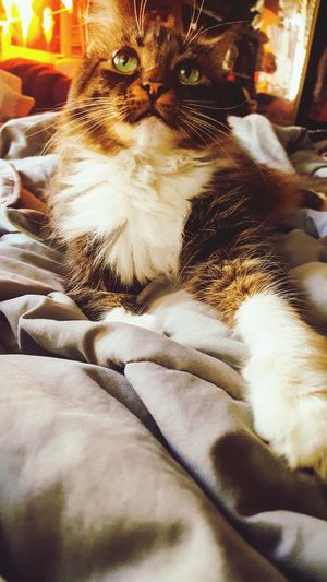 Enjoying Life I Love Animals Cats Of EyeEm Cat Collection Cat Lovers Cats Animal Cat Watching GG The Cat I Love My Cat Cat 😻 Authentic Moments 💙 Animal Themes Animals Cat Cat♡
