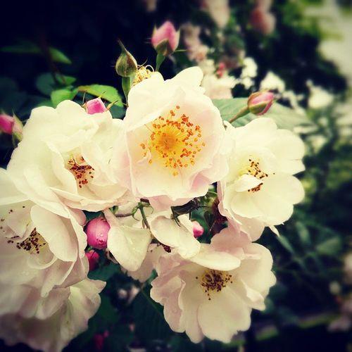 Rosé Park Garden Shanghai