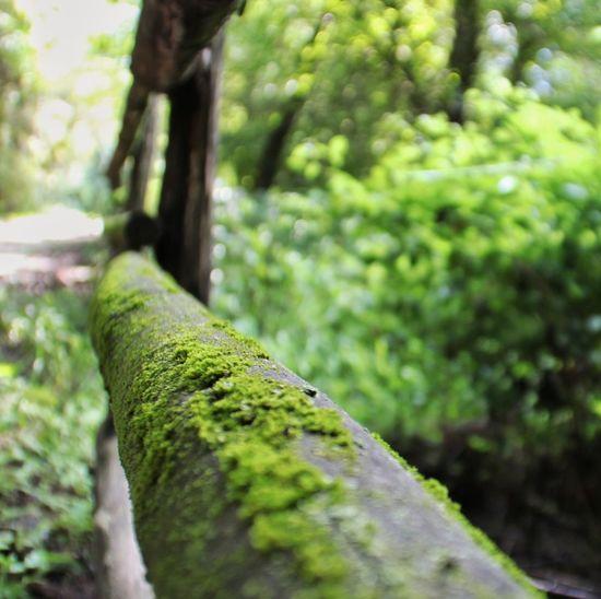 Baum zaun moos
