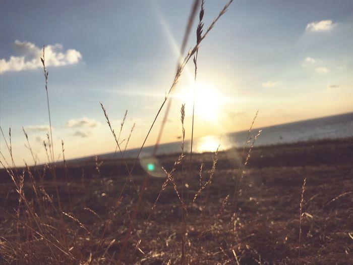 Vitamin Sea 🌾🌊🐟🐠 EyeEm Nature Lover Nature Sunlight Meerliebe Ocean Netherlands Vitaminsea EyeEmNewHere