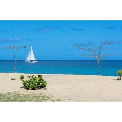 Ig_grenada PureGrenada Livefunner Uncoveryours Westindies_landscape Igersbestshot Ig_caribbean Pics_planet Photo_storee Photo_beaches Ilivewhereyouvacation Islandlivity All_shots Ig_latinoamerica WORLD_BESTSKY Loves_caribbeansea Loves_puertorico Colors_ofourlives World_beautiful_landscapes Igbest_shotz Ig_today Ig_serenity Ig_puertorico Grenada