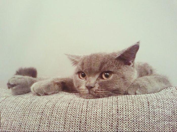 Cat Mandu Cutest Bored #frame