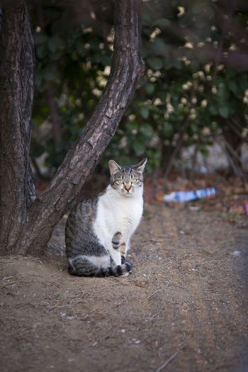Animal Themes Animal Mammal One Animal Vertebrate Domestic Animals Cat Domestic Pets Feline Domestic Cat Tree Plant No People Sitting Day Nature Portrait Land Looking At Camera Outdoors Whisker
