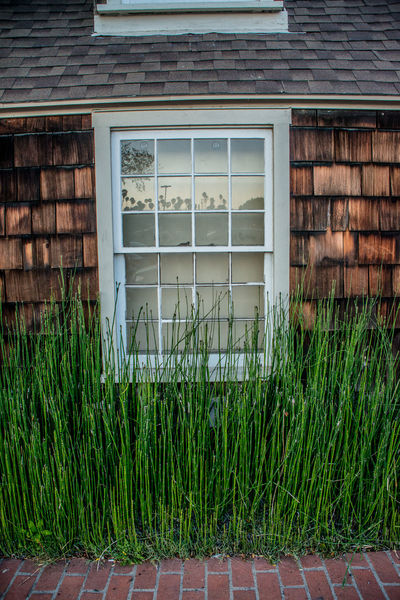 Old cottage in San Pedro Architecture Built Structure Cottage Day Grass Green Green Color Growing Growth House Nature No People Old Old House Outdoors Plant Shingles Window