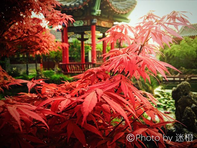 Outdoors Red Nature Tree iphoneshot