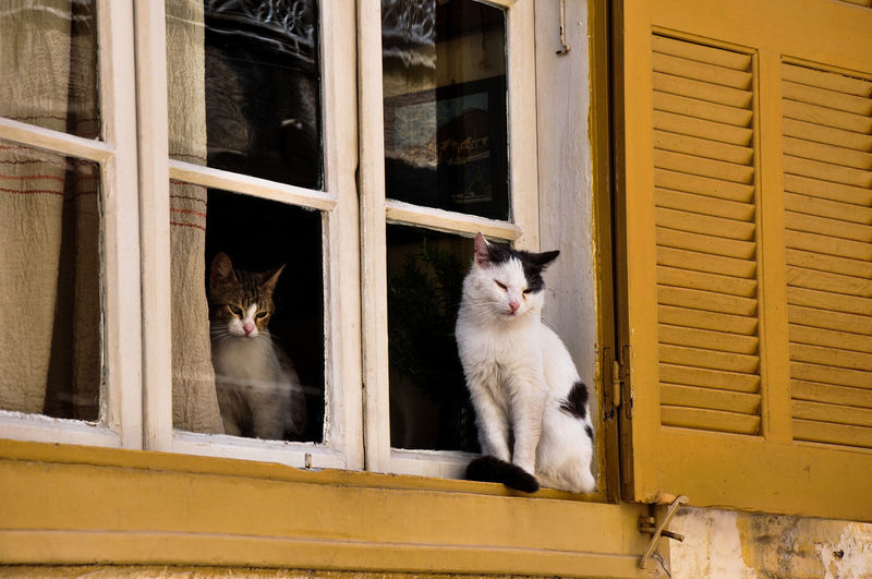 cats Animal Animal Themes Architecture Building Exterior Built Structure Cat Day Domestic Animals Domestic Cat Feline Mammal No People Outdoors Pets Window