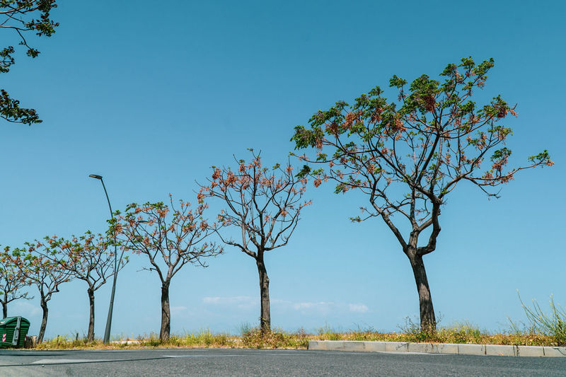 Trees by road against clear blue sky