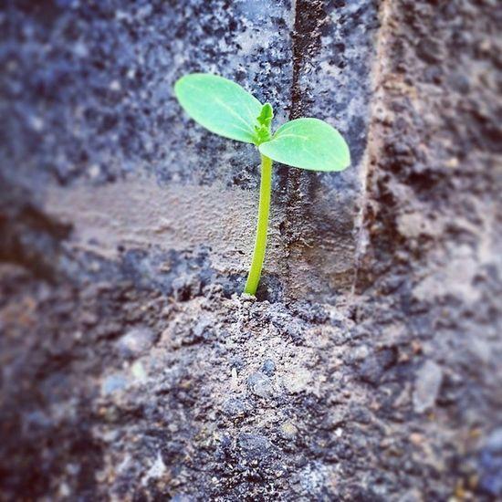 آرزو ، تلاش و امید به زندگی tree for life