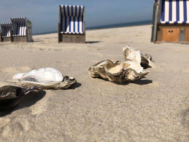 Weiße Düne Norderney Austern Beach Sand Land Nature Sea Sunlight No People
