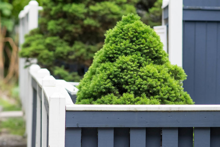 Shrubs Architecture Balustrade Barrier Boundary Building Exterior Built Structure Close-up Day Fence Fences Focus On Foreground Front Or Back Yard Green Color Growth Nature No People Outdoors Plant Railing Shrub Tree White Color Wood - Material