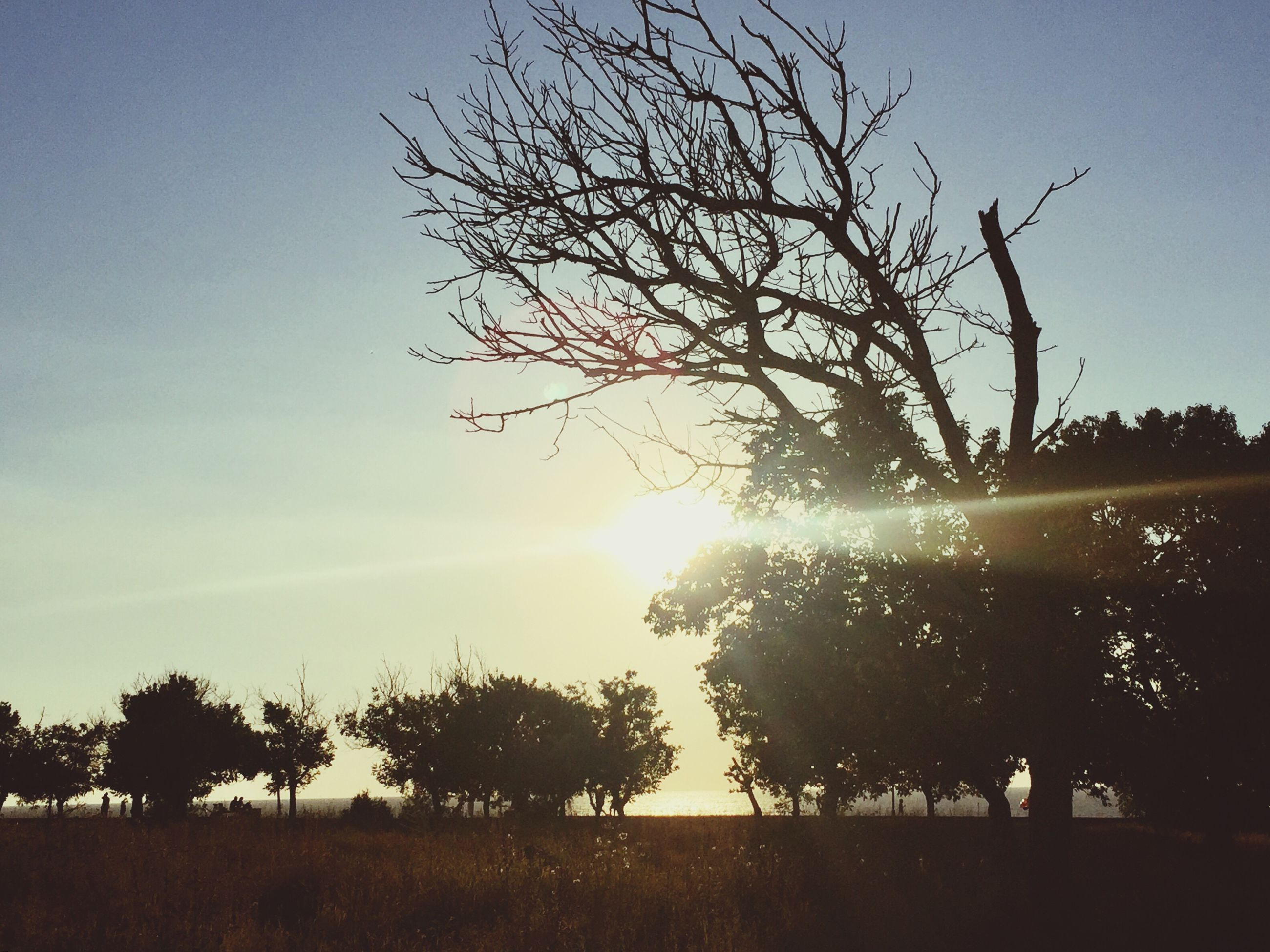 tree, tranquil scene, beauty in nature, tranquility, nature, branch, outdoors, bare tree, landscape, silhouette, scenics, no people, clear sky, growth, tree trunk, sky, day, lone