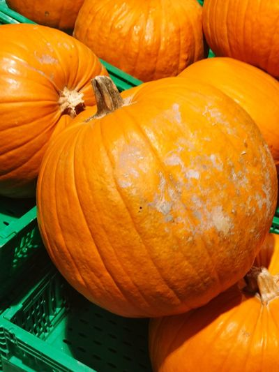 Pumpkin Halloween Autumn Vegetable Orange Color Squash - Vegetable Food Gourd No People Food And Drink Freshness Day Close-up Nature Outdoors