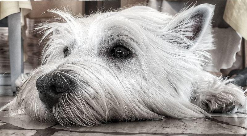 Tired Pet Pet Dog Bn EyeEm Selects Pets Dog Portrait Water Close-up Canine Animal Nose Carnivora Animal Tongue Stray Animal Animal Mouth