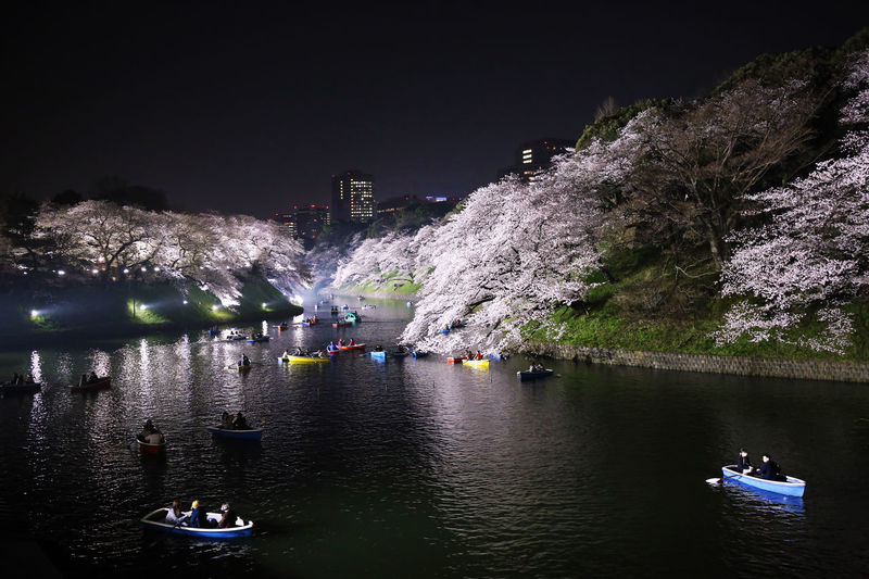 2018 Japan Tokyo Architecture Boat Building Exterior Cherry Tree Cherryblossom Nature Night Outdoors Plant River Sky Spring Tree Water Waterfront サクラ 千鳥ヶ淵 桜