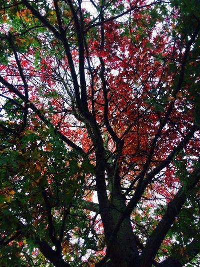 Color Explosion Tree Autumn Fall