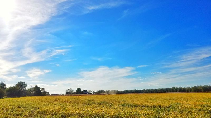 Field Tranquil Scene Landscape Blue Yellow Tranquility Agriculture Scenics Beauty In Nature Flower Sky Growth Rural Scene Nature Plant Crop  Environment Oilseed Rape Cloud Day