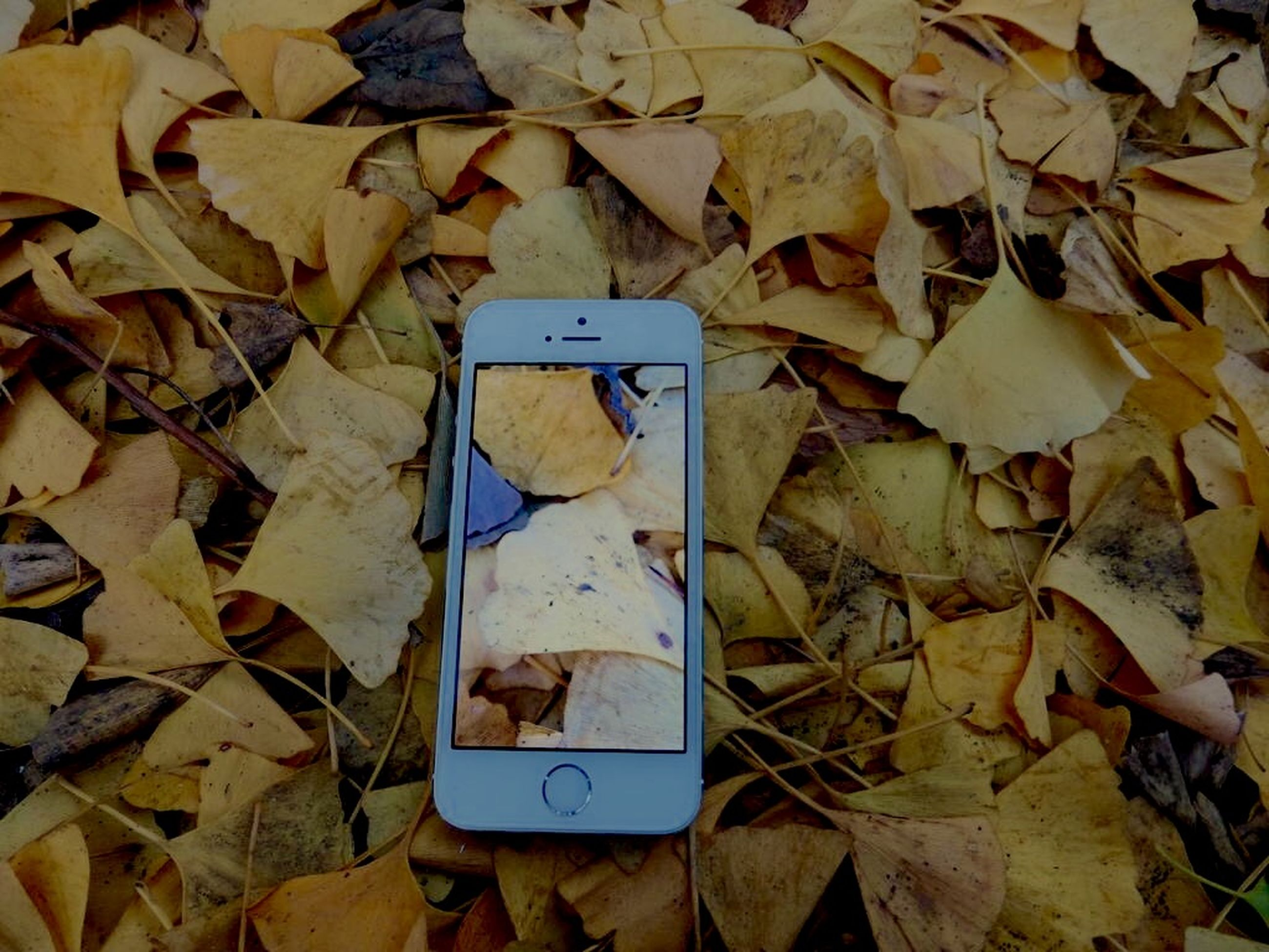leaf, autumn, dry, high angle view, leaves, text, change, close-up, communication, paper, fallen, day, messy, western script, season, no people, aging process, outdoors, still life, abundance